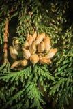 New crop Stock Image