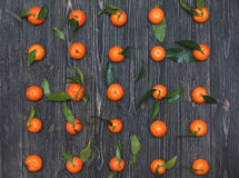 The new crop of tangerines lying in a row on dark wooden textural background Stock Image