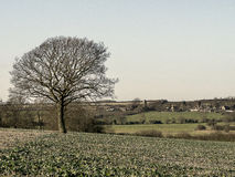 New cropfield  Lone Tree  Village in distance Stock Images