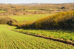 New crops in Combe Valley, East Sussex, England. A lovely view of spring crops as they push through the wet soils after intense spring rains. Farmers have stock photos