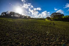New crops in Combe Valley, East Sussex, England. The sun is setting over spring crops as they push through the wet soils after intense spring rains. Farmers have royalty free stock photography