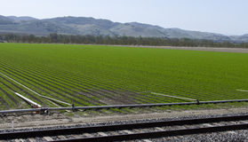 New Crops Growing. Fresh planted crops in an agricultural scene with crops beginning to grow and irrigation pipes can be seen Stock Photos