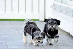 New cut dogs Royalty Free Stock Images