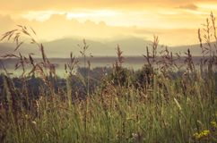 New day concept: vibrant summer sunrise through the tall grass with yellow highlights, blurred clouds and morning fog in backgroun. D Stock Photos
