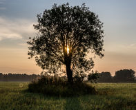 A new day, the dawn of a tree. One tree is growing on the field at dawn Stock Image