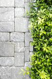 The new design of modern wall. With green leaf Stock Photos