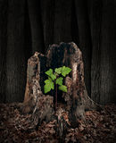 New Development. And renewal concept as a hollow old rotting tree stump with a growing green sapling emerging and replacing the past as metaphor for revival in Stock Photos