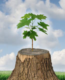 New Development. And renewal as a business concept of emerging leadership success with an old cut down tree and a new strong seedling growing from the center Stock Image