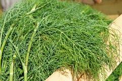 New dill crop in a wooden box in summer garden Stock Photos