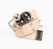 New dog collar Stock Image