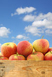 New Dutch apple variety called Dalinco in a wooden crate Royalty Free Stock Images