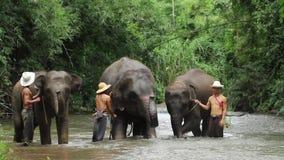 New elephants practice show Stock Images