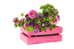 New England Asters in crate Stock Image