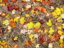 New England Fall Foliage Royalty Free Stock Images