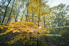 New England in fall. Fall foliage in New Hampshire, New England Stock Images