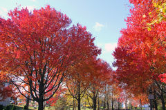 New England Fall in Gloucester, Mass Stock Images