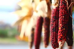 New England Fall Harvest Stock Photography