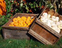 New England Farm Stand. A local New England farm stand in the fall with pumpkins and garlic Stock Images