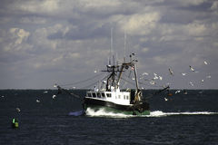 New England Fishing Trawler and Seagulls. A green and white fishing trawler surrounded by seagulls looking for an easy meal, making its way back towards the Stock Image