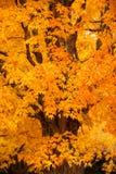 New England foliage Stock Photos