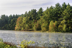 New England forest and pond. New England autumn foliage along edge of pond Stock Images