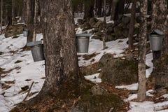 New England lönnsirap underminerar hinkar arkivbilder