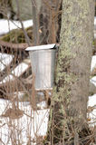 New England Maple Sugar Tapping. Commercial maple sugar tapping in New England (Connecticut). Focus = the bucket. 12 MP camera Stock Image