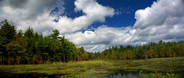 New England marsh & lily pond Royalty Free Stock Photography