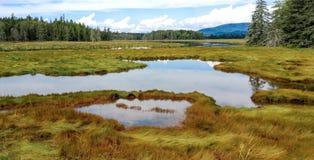 New England Marshland Royalty Free Stock Images