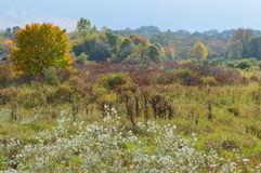 New England Meadow I. New England countryside in October. Fall colors with beautiful foreground florals and shrubs Royalty Free Stock Photo