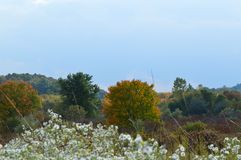 New England Meadow III. New England countryside in October. Fall colors with beautiful foreground florals and shrubs Royalty Free Stock Image