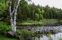 New England Pond stock photography