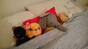 Tucked in bed cuddly toys Stock Images