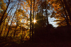 New England sun through the trees. Sun rays late afternoon in New England fall foliage Royalty Free Stock Photography