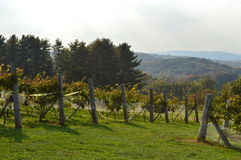 New England Wine Country. Rows of vineyards overlooking distant hills of New England countryside. Shot in Connecticut in the month of October Stock Photo