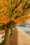Fall foliage in suburban Massachusetts royalty free stock image