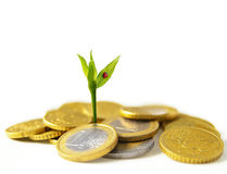 New Euro growth Royalty Free Stock Photos