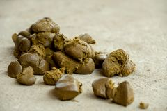 New feces horse big. Feces horse big on the ground Royalty Free Stock Photos