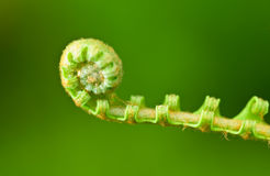 New fern leaf Stock Photography