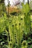 New fern leaf. Brand new fern leaf in spring Royalty Free Stock Photography