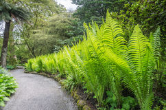 New ferns in the woods Stock Photography