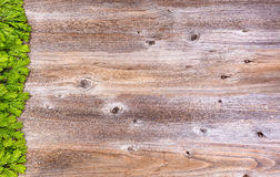 New fir tree branch tips on rustic wood board for holiday season Stock Photography