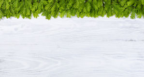 New fir tree branch tips on white wooden boards for the seasonal Royalty Free Stock Photography