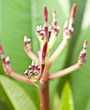New flower buds Royalty Free Stock Photos
