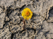 New flower on cracked soil Stock Photography