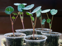 New Flower Seedlings Stock Photo