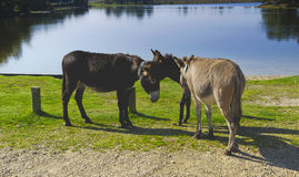 New forest Royalty Free Stock Photography