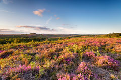 The New Forest in August Stock Images