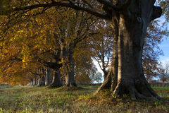 The New Forest Royalty Free Stock Photos