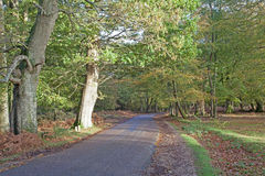The New Forest Stock Images